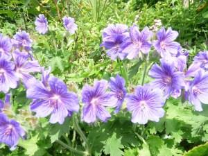 beechen-flowers