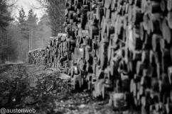 Holzeinschlag die Zweite