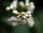 2015-06-23_08_nach_dem_grossen_Regen
