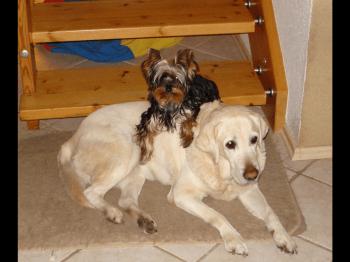 Riva und Oscar - Das Duo Infernale ;-)
