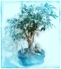 Bonsaifotospaß Bild 04