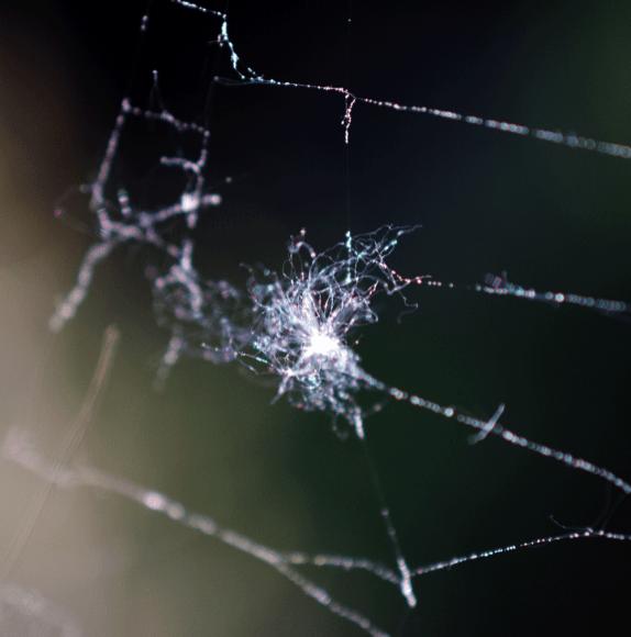 Spinnennetzt