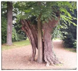 Baum in Baum