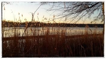 beruhigte (Ufer-) Schilfzonen