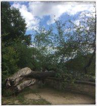 überlebensfähige Bäume