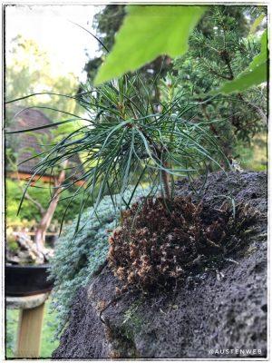 Felsbepflanzung Detailaufnahme