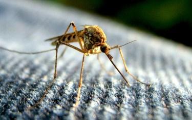 West Nile Virus is Baaaaack