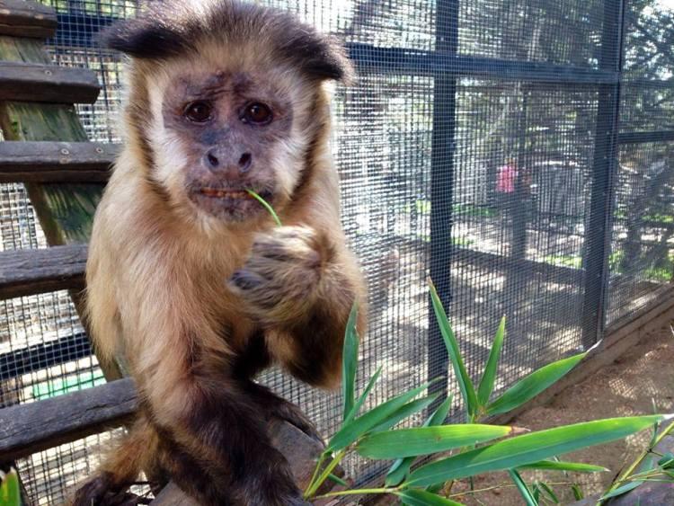Zoo Craft Sanctuary