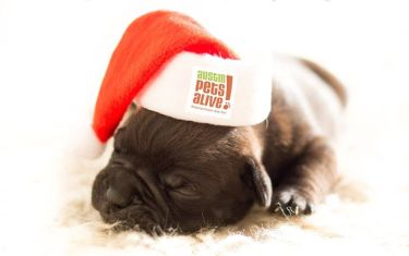 Santa Photos at Austin Pets Alive!
