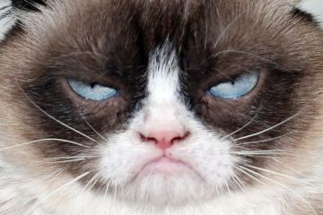 https://upload.wikimedia.org/wikipedia/commons/3/36/Grumpy-Cat.jpg