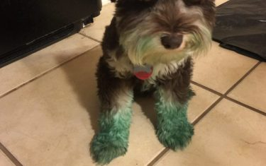 Dogs Are Literally Turning Green From Visiting Zilker Park!