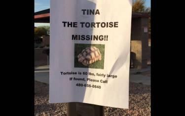 Runaway 60lb. Tortoise Mascot Safely Returned To Gullett Elementary
