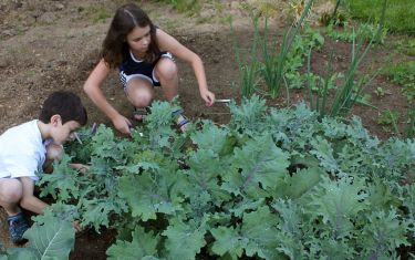 The Future Looks Bright, And Green, Thanks To These Austin Youth Programs