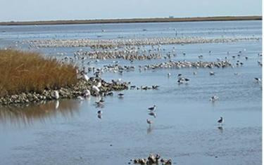 Birdathon: Upper TX Coast Migration & East TX Warblers