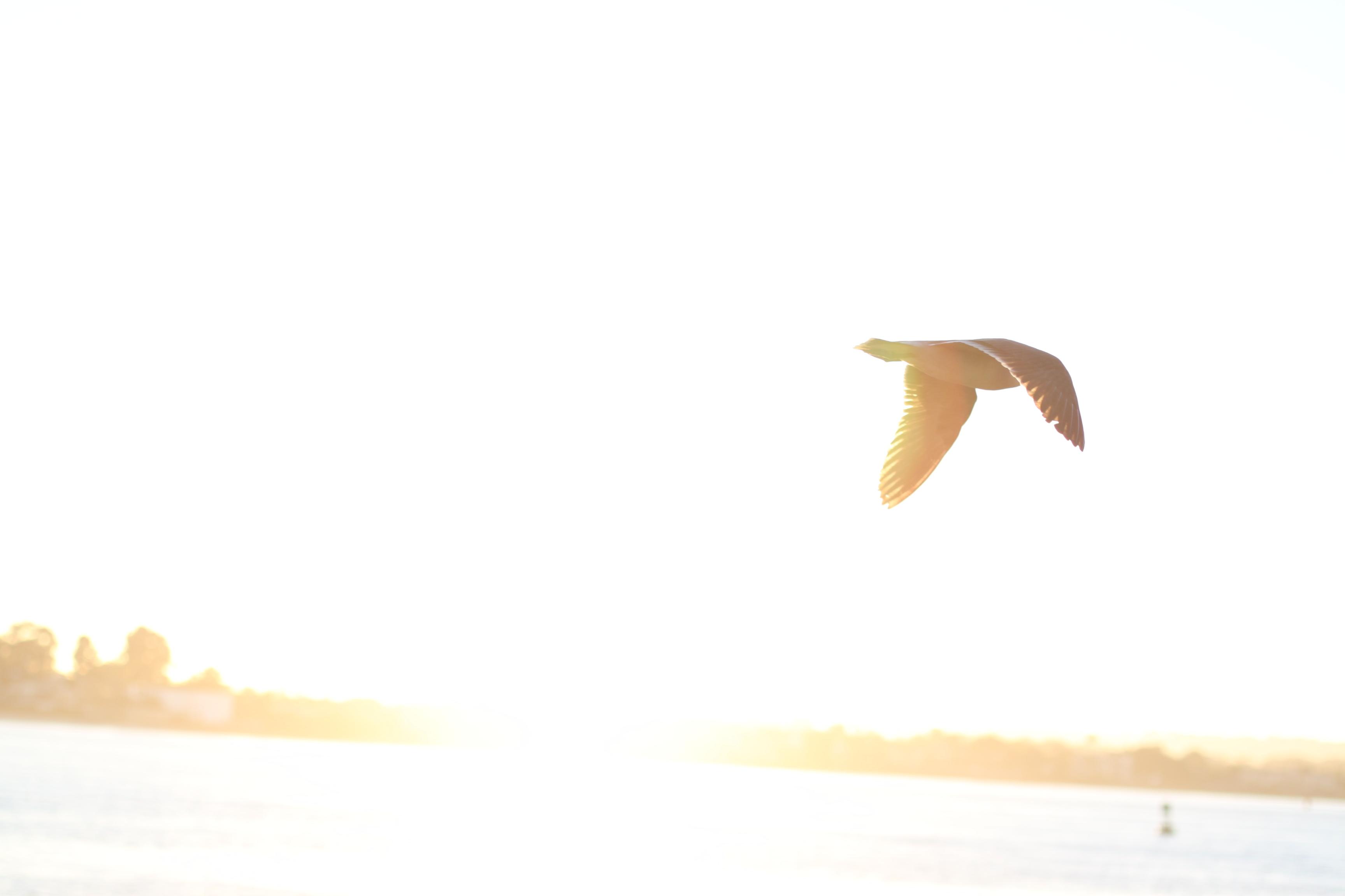 Bird in the sun