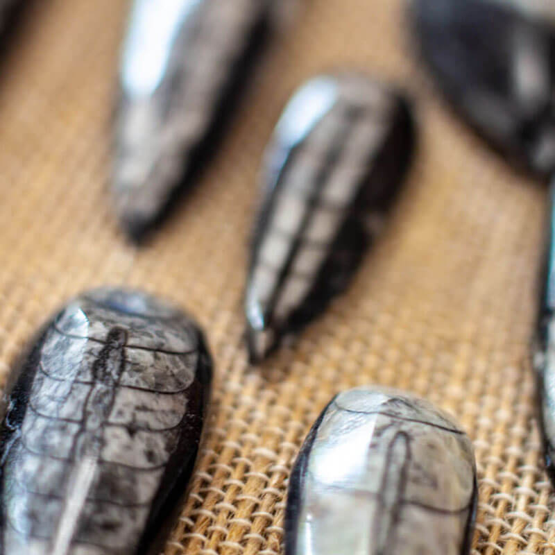 Trilobite Cabochons - Semi precious gems