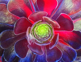photo-of-red-flower-center-by-Jann-Alexander-©2014