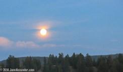 Goodnight Moon by Jann Alexander ©2014