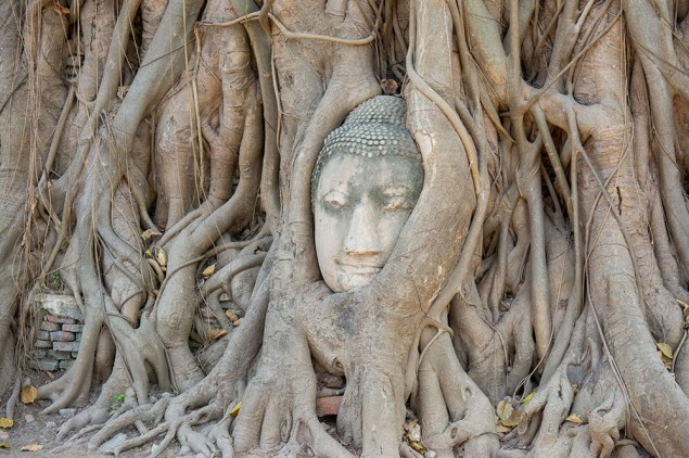 Buddha overgrown by a tree