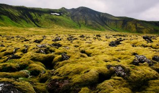 A large part of Iceland looks like this, no trees only moss