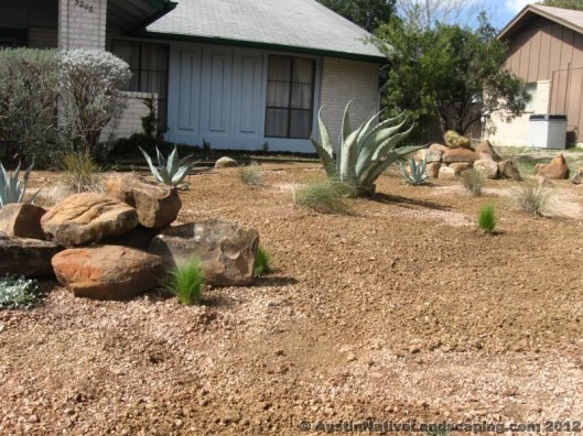 Agave-Americana-Xeriscape-Texas-Pictures-Designs