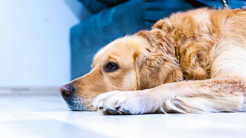 Your Pets May Be Affecting Your Homes Marketability