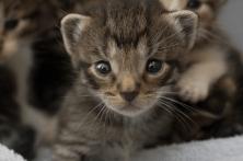 animal-welfare1