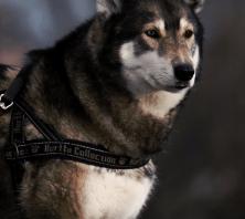 animal-welfare3