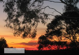 """Australian Sunset"" by Lisa Kiss"