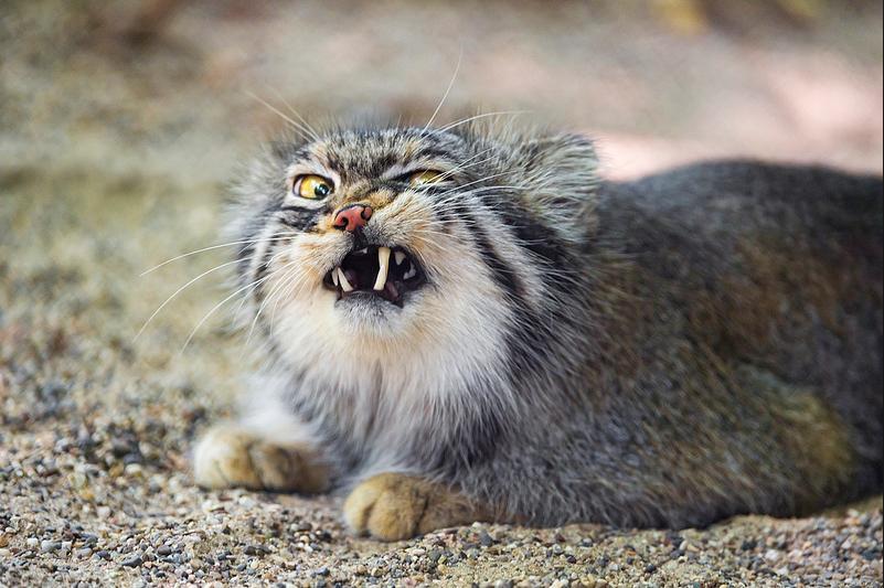 Slackbastards cat eaten by Hannibal