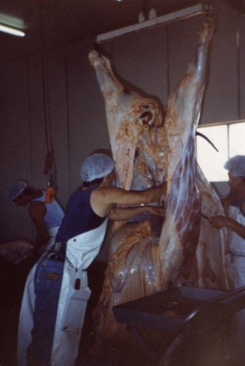Curtin Springs - Abattoir pictures (3)