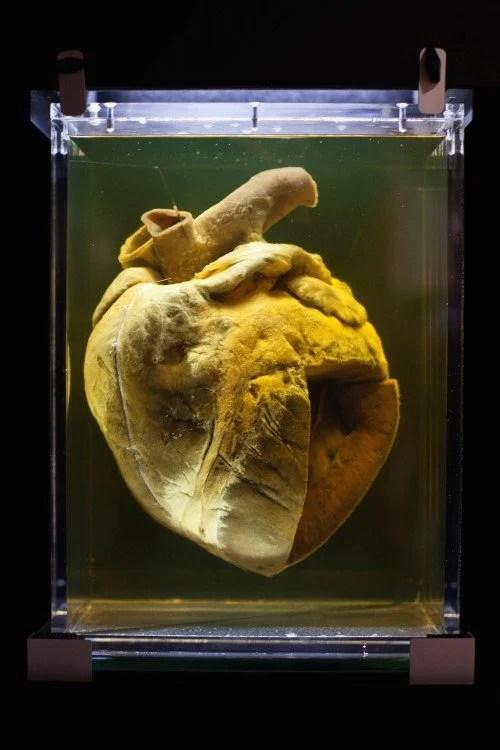 phar lap heart