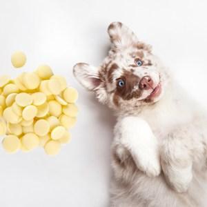 Yoghurt with Dog