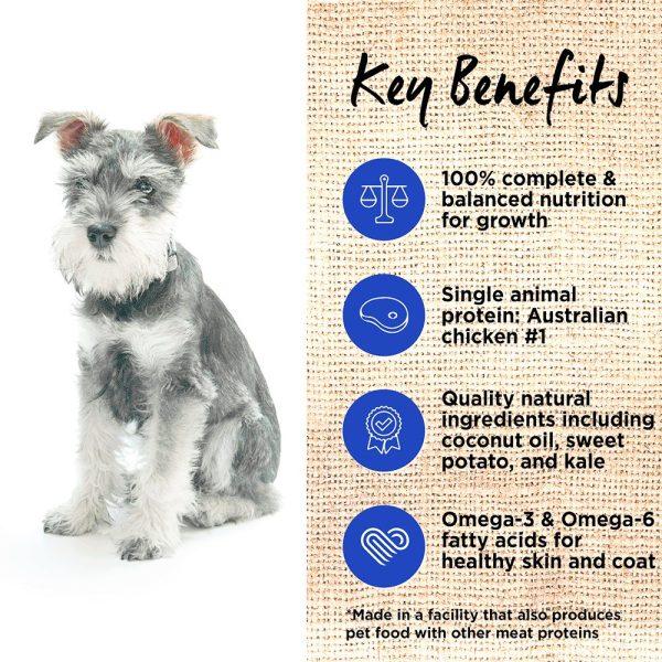 Ivory Coat Puppy Chicken Info