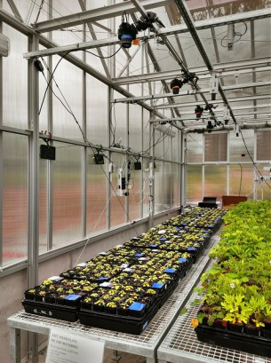 Plants in ANU greenhouse