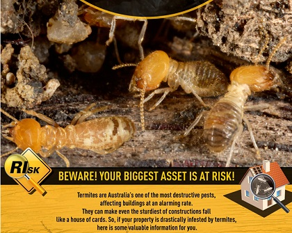 Your Home: What happens to termites in the winter?