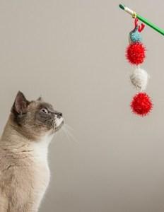 Cat Teaser