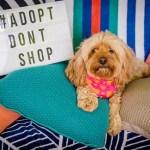It's Pet Adoption Day in Australia on Sunday 4 February 2018