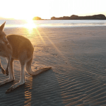Planning For Paradise: 7 Essentials to Keep in Mind When Visiting Queensland