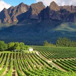 The Winelands of South Africa