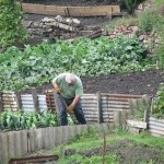 Urban Agriculture is the Key to a Sustainable Future