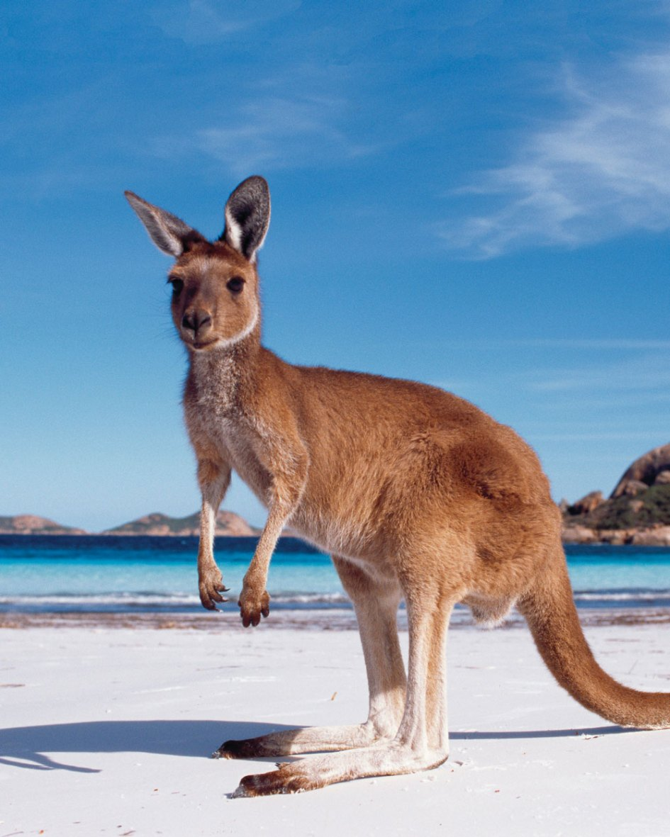 About - Australia One | Australian & New Zealand Inbound Tour Operator