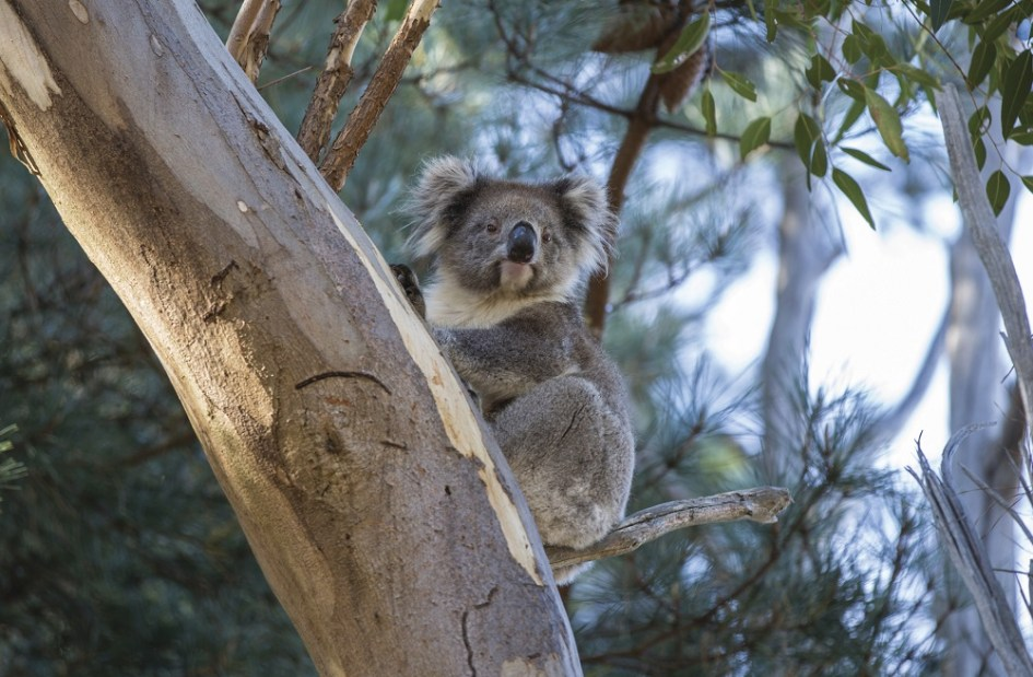 Where to see Australian Animals