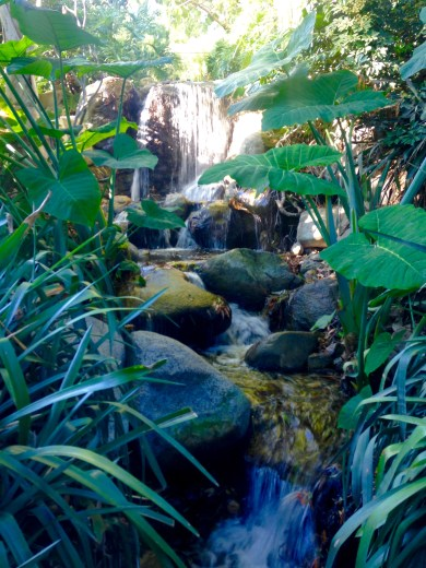 Waterfall in the Palm Garden