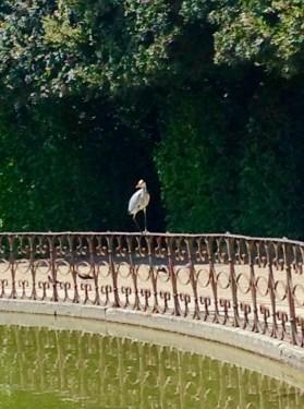 Heron in Giardino di Boboli in Florence