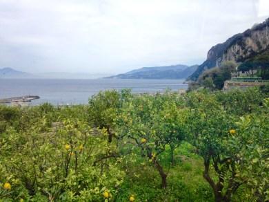 Lemon Trees on Capri, Italy
