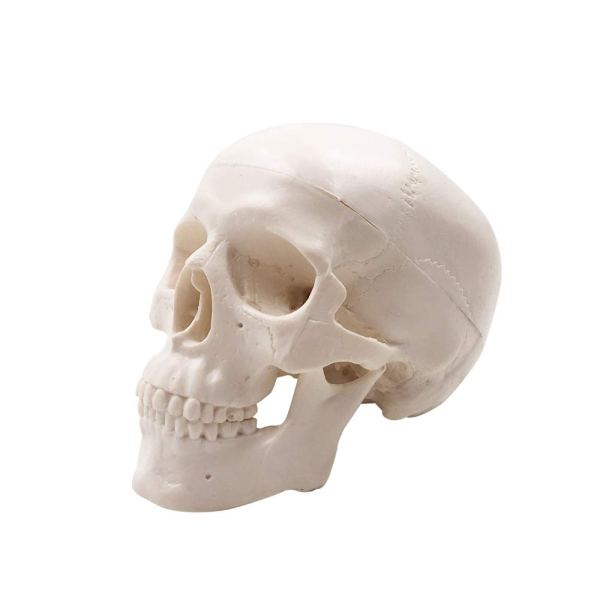 Mini Human Skull Model, Palm-Sized Desktop Skull 3.9 x 2.7 x 3.1 Inch with Removable Cap and Jaw Moveable 2