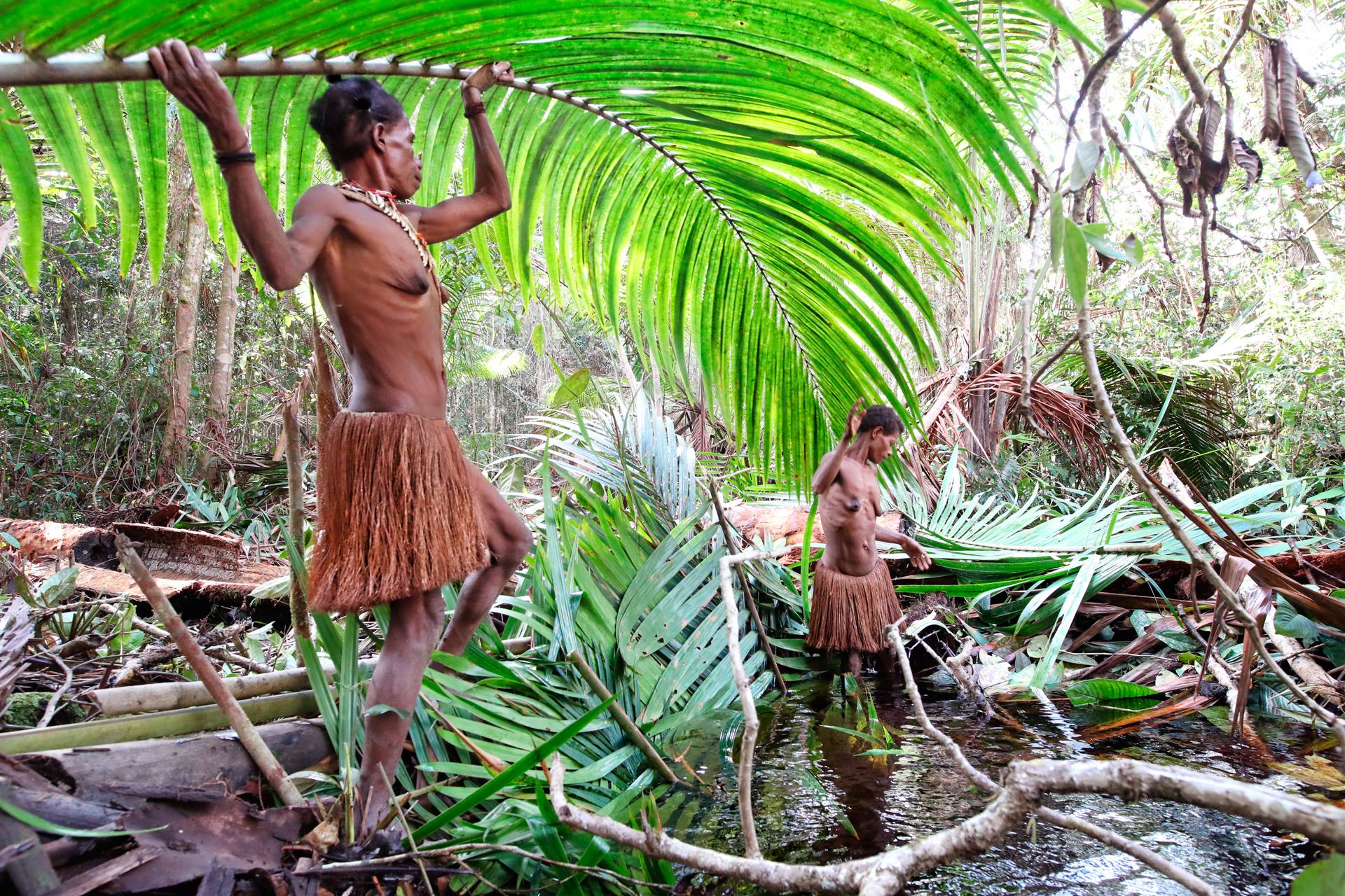 Facts About Korowai Tribe In Southern Papua Authentic Indonesia Blog