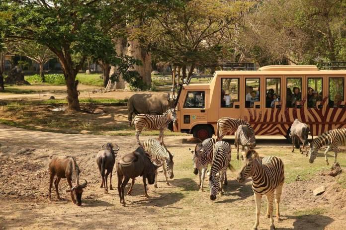 8 Best Zoos In Indonesia Authentic Indonesia