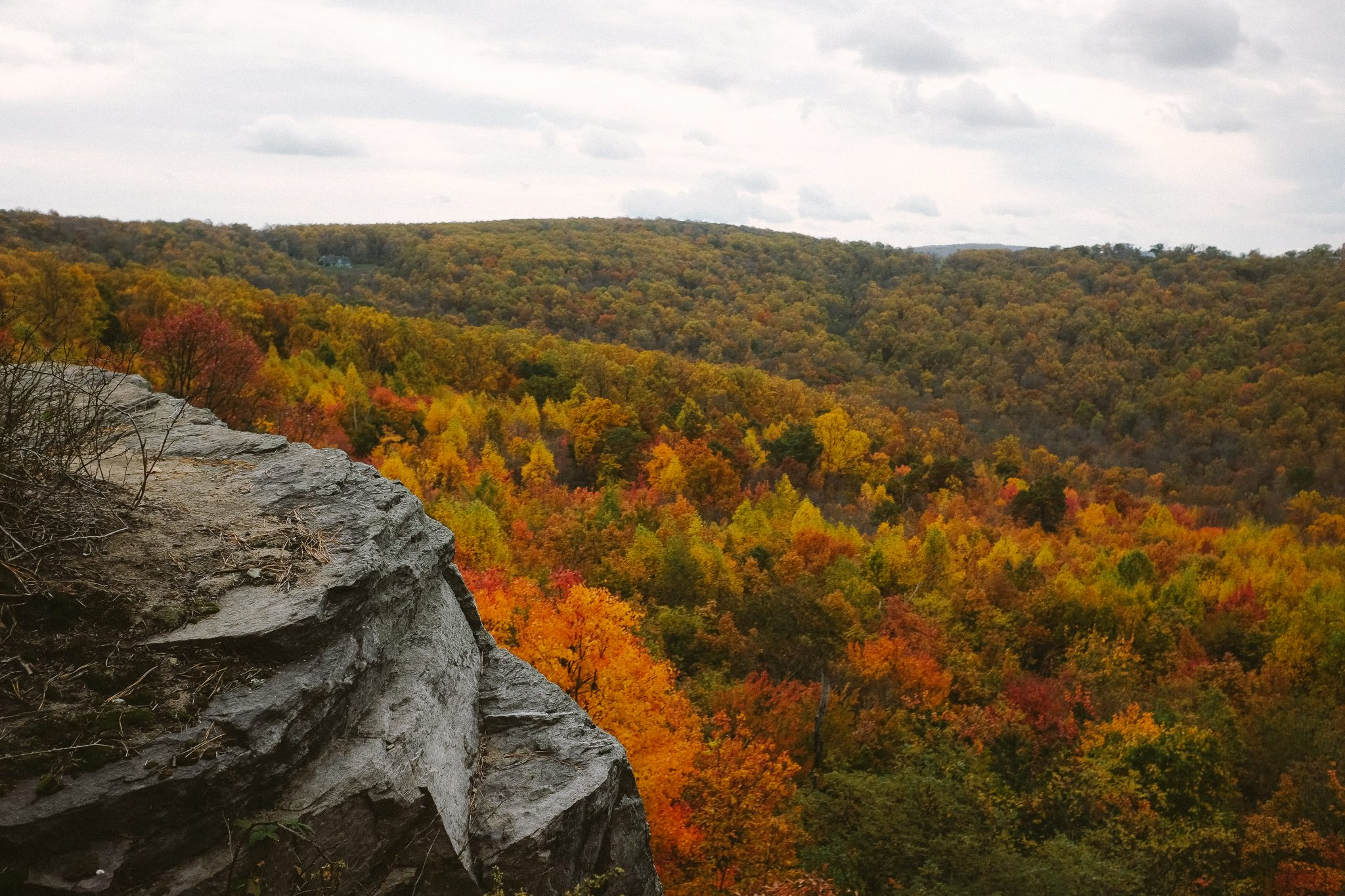 orange and yellow leaves in Shenandoah National Park